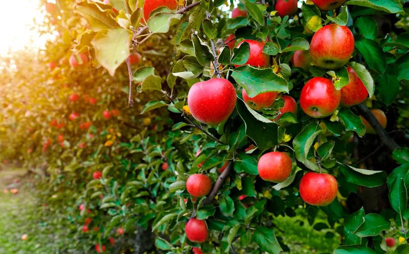 Siempre es recomendable lavar las frutas antes de ingerirlas